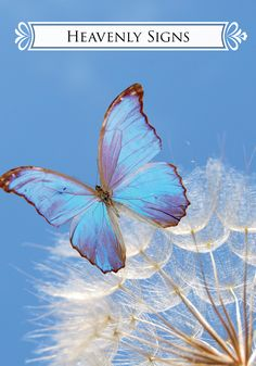 Oracle Card Heavenly Signs | Doreen Virtue - Official Angel Therapy Website