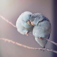 Birdies in love...