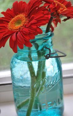 Red Gerber Daisy in Tiffany Blue Mason Jar by Digirrl