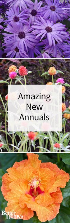 We've scoured the latest introductions and newest releases for the best, most colorful annuals for your garden in 2016.