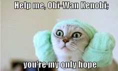 lolcat + starwars=epicness! @Macy Blackwell this made me think of you! ;)