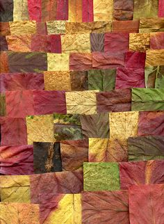 37450 leaves by horticultural art, via Flickr