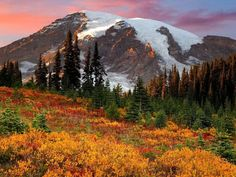 Fall in Paradise, Mount Rainier National Park - farhad