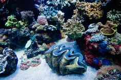 Giant Clams: The Ocean's Magnum Opus