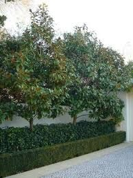 Image result for african box hedging  im