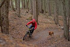 5 Tips For Training A Mountain Bike Trail Dog! - 5 Tips For Training A Mountain. - 5 Tips For Training A Mountain Bike Trail Dog! – 5 Tips For Training A Mountain Bike Trail Dog! Mountain Biking Quotes, Mountain Biking Women, Mountain Bike Trails, Road Bike Women, Mountain Bike Helmets, Buy Bike, Dressage Horses, Bicycle Maintenance