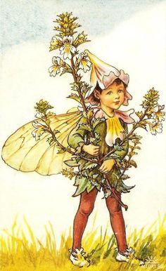 Феи цветов от Сесиль Мэри Баркер Character Creation, Character Design, Cicely Mary Barker, Gnome, Beautiful Fairies, Flower Fairies, Drawing Skills, Art Challenge, Disney Drawings