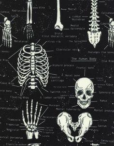 Timeless Treasures Glow in the Dark Skeletons