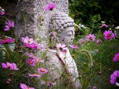 34-17 般若寺:石仏と秋桜① 百寺百景ギャラリー
