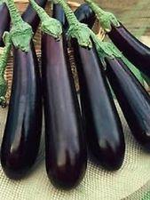 Long Purple Eggplant *Heirloom* Non-GMO (100 Seed's)
