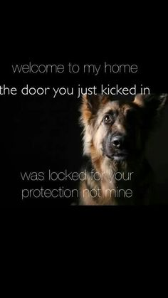 German Shepherds are such sweet dogs...but fiercely loyal protectors. Gosh, I miss my boys. They were such amazing dogs.