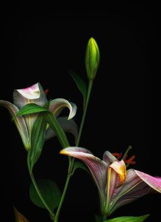 A floral scanography project by Toby Braun, an interdisciplinary designer in Miami Beach