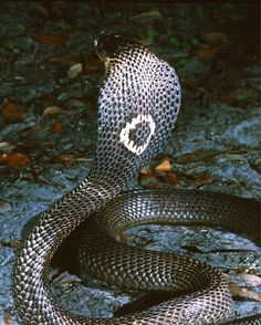 #snakes Me scared