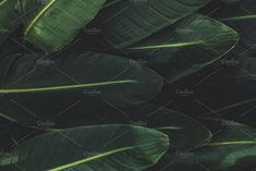 Low Key Tropical Leaves by René Jordaan Photography on @creativemarket