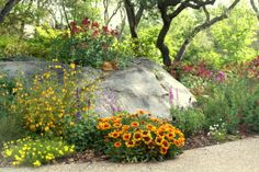 pictures of draught resistant plants | Drought tolerant plants attract wildlife Click the image to enlarge.