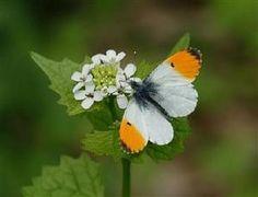 Pretty butterfly on flower...