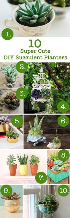 10 cute DIY succulent planters to make in an afternoon.