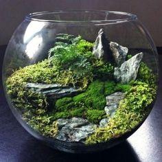 флорариум Горы