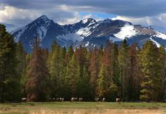 Rocky Mountain National Park.  I cannot stand it anymore--come one spring!! Need to be in my favorite park!!
