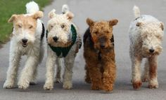 I love terriers