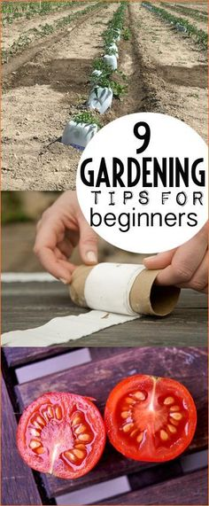 Vegetable Garden Tips for Beginners. Awesome gardening hacks for your vegetable and flower gardens. Easy ways to plant, maintain and fertilize your garden. How to grow the best tomatoes in the neighborhood.