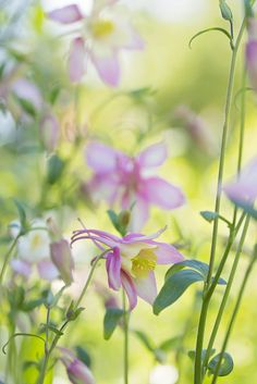 ~~Shadow of a Dream | Columbine by Synapped~~