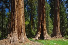 Seqyoiya National Park | ... usa national park week april 21 29 2012 sequoia national park is a