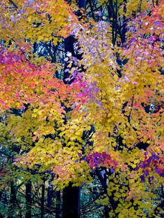 ✯ Michigan Woodland Color Blast