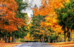 Road of Color - Colors abound in this small county park on this autumn afternoon.