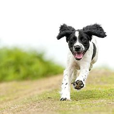 If your dog runs away when you call him, or simply doesn't come to you, try these dog training tips for teaching your dog to come when called. Dog Line, Dog Id Tags, Dog Park, Dog Behavior, Dog Training Tips, Little Dogs, Happy Dogs, Funny Dogs, Dogs And Puppies