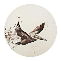 Gulf Pelican by Aimee Van Drimmelen