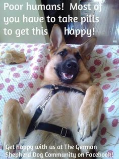 Looks like my puppy Eva but she's darker...but she gets that same smile. German Shepherds are the BEST!!! -