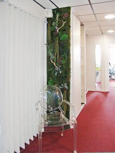 Mur végétal, décoration murale, accueil entreprise. Végétaux stabilisés.