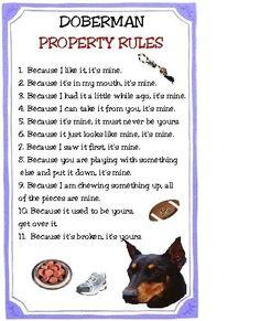 Doberman Property Rules Magnet VERY FUNNY by tedwards52 on Etsy, $4.79