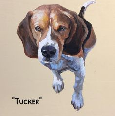 """""""Tucker"""" is a 12 x 12 commissioned pet portrait. I always have fun painting pet portraits especially when the client sees the finished painting for the first time. DM for information to order your own custom portrait. #pet #petportrait  #dog #puppy #beagle #sentimental #keepsake #artgallery #art"""
