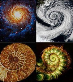Phi in nature - Galaxy, Hurricane, Nautilus shell, Fern frond.  Golden Mean.