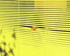 Neon Yellow Blinds