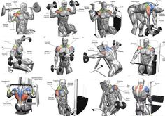 The 10 Best Shoulder Building Exercises for Bodybu. The 10 Best Shoulder Building Exercises for Bodybuilding Beginners Full Shoulder Workout, Shoulder Workouts For Men, Shoulder Workout Routine, Chest Workouts, Gym Workouts, At Home Workouts, Workout Routines, Workout Ideas, Sholders Workout