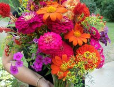 I want to grow Minnesota Flowers in my yard! These are from Renee Arcand