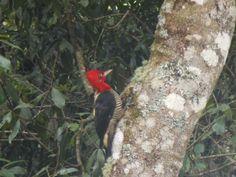 Monte Verde: www.grunwaldchales.com.br
