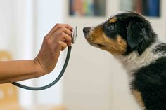 A Cut Above: What Makes Private Veterinary Practice Special? | Godspeed Veterinary Animal Care