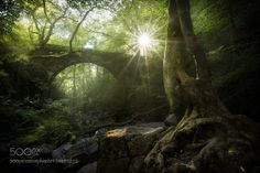 Forest lights by David_Martinez_Lombardia