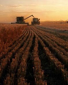 favorite time of the year I LUV corn harvest cant wait til its harvest agin!!! Yea!!