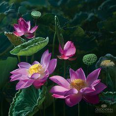 Замечательные фотографии прекрасного растения лотос... Фотограф Duong Quoc Dinh. Обсуждение на LiveInternet - Российский Сервис Онлайн-Дневников