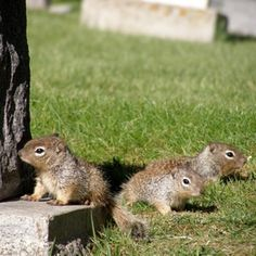 How To Get Rid Of Squirrels How To Get How To Get Rid