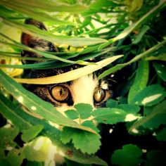 Kiekeboe! Foto door L. Boone #Fotowedstrijd #Natuurmonumenten