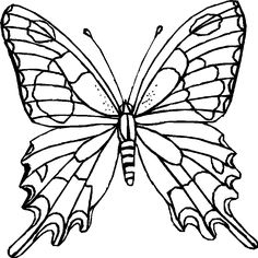 realistic butterfly coloring pages | Only Coloring Pages