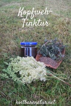 Do you have a headache? With these three wild herbs you can quickly make a tincture as a natural antidote! Informations About Wildkräuter-Tinktur als natürliches Mittel gegen Kopfschmerzen – Kostbare … Natural Remedies For Allergies, Natural Headache Remedies, Healing Herbs, Medicinal Plants, Healthy Beauty, Natural Medicine, Natural Health, Health And Wellness, Herbalism