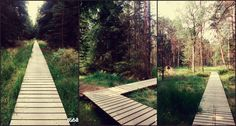 #Forest#freshair#nature