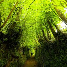 The sunken path to Clovelly in Devon | 16 Places You'll Hardly Believe Are In The United Kingdom
